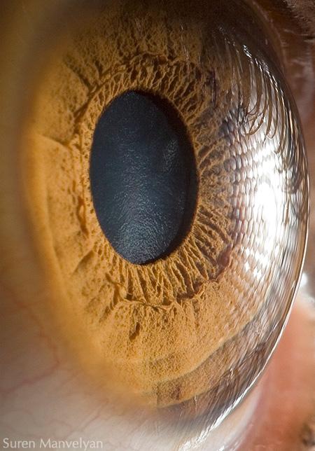http://www.n-javan.com/aks/khalaghiat-pic/eye13.jpg